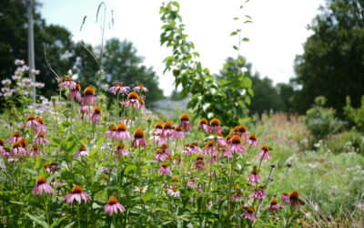 Promising Perennials: An Introduction to Edible Forest Gardening
